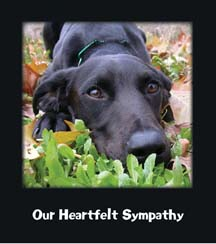 Send your pet friends, family and colleagues a heartfelt message of sympathy and support after the loss of their pet ...